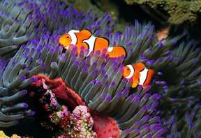 ~Bank Holiday/Half Term Family Fun~  Half Price Family Ticket To Blue Reef Aquarium Portsmouth Only £16.75 (Was £33.50) @ Eagle Fm