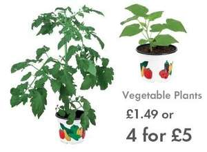 Vegetable Plants - LIDL - £1.49 each or FOUR for £5 - 21st May and 11th June - Tomato, Capsicum, Cucumber or Courgette