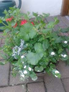 filled hanging baskets. Home Bargains. £4.99