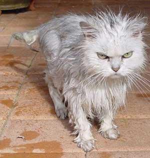 FREE 30 day sample of Feliway for stressed kitties (£1.99 p&p) @ medic animal