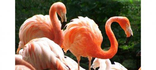 Flamingo Land £58 via Key103 offers