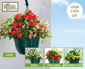 Large 4lit Filled Hanging Basket £3.99 at ALDI