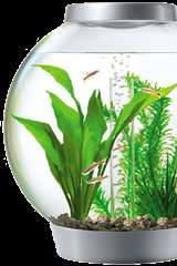 Free Aquarium Water Test - Pets at Home