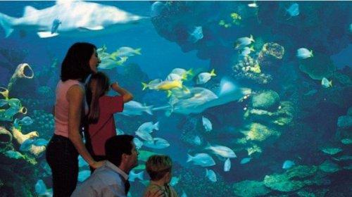 Blue Planet Aquarium £27 Half price family of four ticket to Blue Planet Aquarium @ Key 103