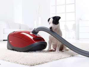 Cheapest Miele  Cat And Dog Vachum Cleaner
