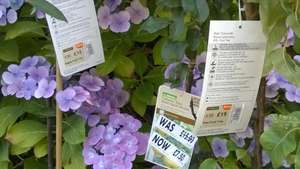 Homebase Fruit trees & Plants half price or less @ Homebase (Greengates, Bradford)