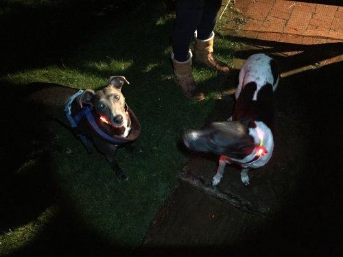 """Led hi-vis """"dog collars"""", £3.99 at Aldi"""