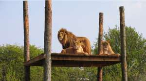 South Lakes Zoo £15 for family of 4 - usually £30 @ Rock FM