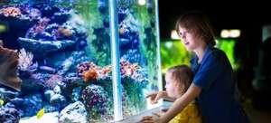 4* Family break only £32pp – inc. Traveller's Choice hotel (4/5 TripAdvisor), breakfast, zoo, Madame Tussauds & SEA LIFE
