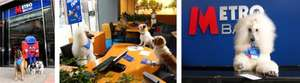 Metro Bank refunds customers when they rehome a dog or a cat from Battersea Dogs and Cats Home. Refunds will be up to a maximum of £65 for cats and £105 for dogs.