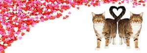 PET-SUPERMARKET  - JAMES WELLBELOVED (& OTHER BRANDS) CAT & DOG FOOD OFFERS