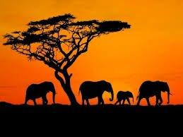 2 Weeks Half Board Tanzania & Safari £1089.82pp @ Agoda.com