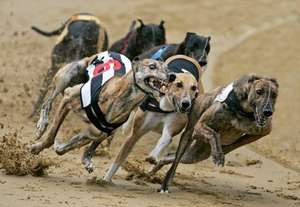 Greyhound Racing Wimbledon - FREE Entry, FREE Racecard, FREE Drink (Similar deals at Manchester & Birmingham)