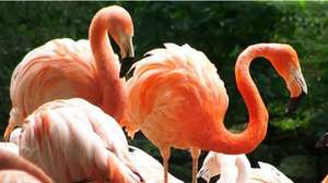 Half-price family ticket to Flamingo Land 2A 2C. Clyde offers