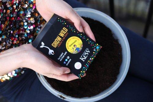 Get free wild flower seeds from Grow Wild
