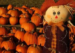 Pumpkin Patch 50% off non sale items and extra 20% off sale Items