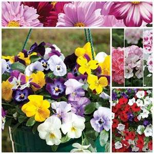 2 Hanging Baskets & 6 Plug Plants  £17.99 Delivered @ Jersey plants