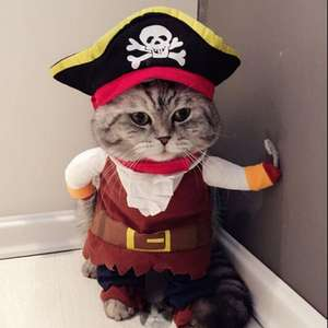 Cat / Dog Pirate Costume from £3.50 delivered @ Ali Express
