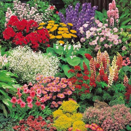 72 Perennial Plant Lucky Dip £5 + £3.95 postage Van Meuwen