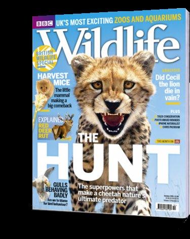 BBC Wildlife magazine 5 issues for £5.00