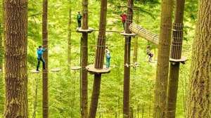 Go Ape for Less at Woburn Safari Park - 15% off