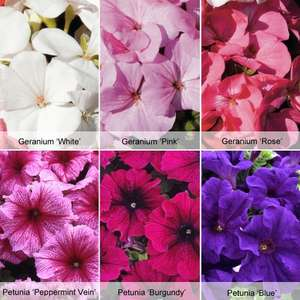 36 Free* bedding plants from Thompson and Morgan, pay £5.65 p&p