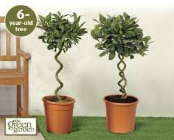 Bay Trees £19.99 @ Aldi (from this Thursday)