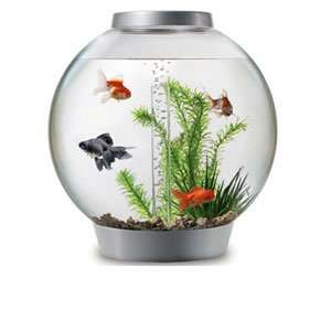 biOrb with Light 30 Litre Silver Coldwater Aquarium Kit £65 delivered @ Pets at home