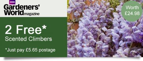 Two scented climbers - Wisteria prolific sinensis & Trachelospermum jasminoides (£5.65) @ Thompson & Morgan