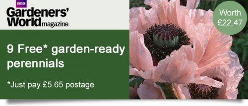 9 (pay postage only) Garden Ready Perennials - Delphinium Poppy Geranium £5.65 thompson & morgan
