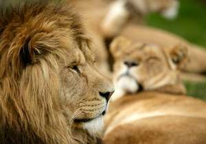 Dads Go FREE weekend Saturday 18th & Sunday 19th June 2016 @ Longleat (with voucher or code)