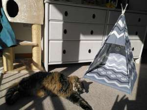 "Do you have a cat or ""small dog""? Do you need to spend £9.99? A pet teepee from Home Bargains might be just the thing."