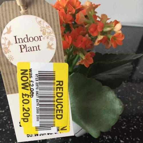 indoor plant was £2 now 20p!!! @ tesco