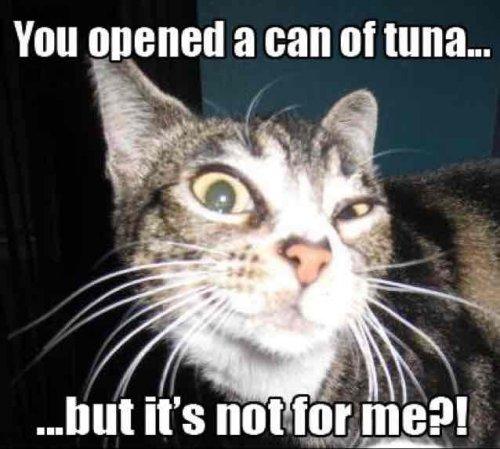 4 pack tuna John west £2.50 @ Asda
