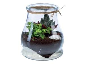 Small Terrarium £4.99 at LIDL
