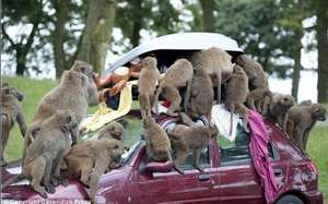 KNOWSLEY SAFARI PARK £10 PER CAR - FROM 5TH SEPT