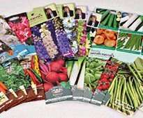 Wyevale Garden Centre - 50p packs of veg and flower seeds in store