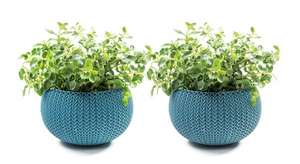 Keter Knit Cozies Indoor/Outdoor Garden Plant Pot Planters, Small - Ocean Blue, Pack of 2 £7.88 prime / £12.73 non prime @ Amazon