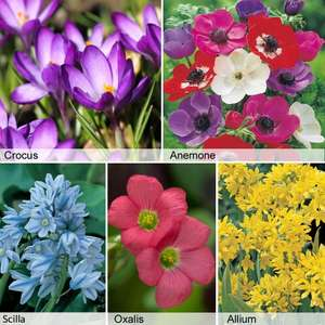 Thompson & Morgan 425 Spring Bulbs for £9.94 (usually £49.94) via MSE link