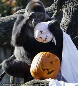 Free Entry on October 31st 2016 for All Children in Full Halloween Fancy Dress at Monkey World