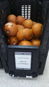 Free Pumpkins at Sainsbury's