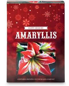 Amaryllis Gift Box - £2.49 in-store at Aldi  sc 1 st  HotUKDeals & Amaryllis Gift Box - £2.49 in-store at Aldi - HotUKDeals Aboutintivar.Com