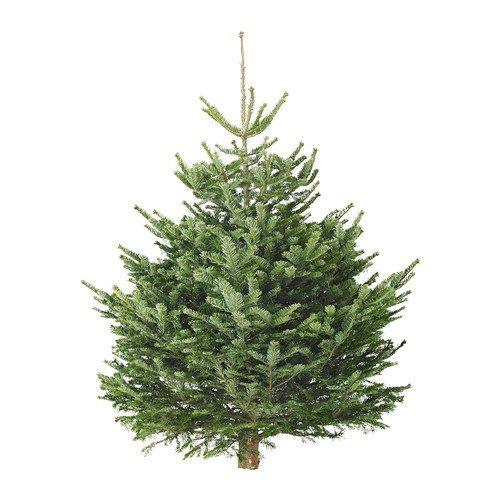 Buy £25 Ikea Xmas tree and get £20 voucher - NOW LIVE @ IKEA
