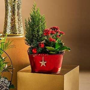 Festive zinc planter with planted glittering Christmas tree, flowering plant & decorations £5 & Fresh wreath £7 order and collect @ Morrisons