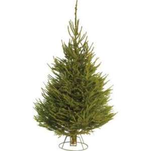 HOMEBASE £10 Real Norway Spruce Christmas Tree 5-6ft