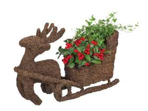Christmas potted plants including reindeer pots from 1.89 @Lidl