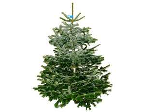 Real Christmas Trees £10 - B&Q Half Price or better in store