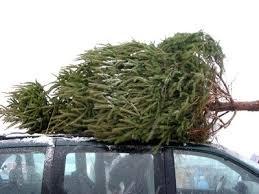 £5 christmas tree with a £20 ikea voucher -  ikea Southampton