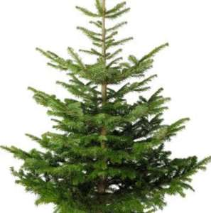 real Christmas trees 10P @ b&m
