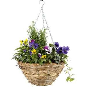 Mixed Autumn Hanging Basket - 30cm 10p instore @ Homebase